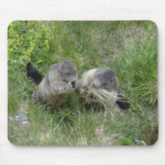 Marmots mousepad
