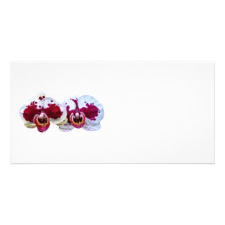 Maroon and White Phalaenopsis Orchids Side by Side Photo Card Template