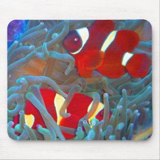 Maroon Clownfish Mouse Pad
