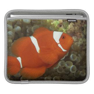Maroon clownfish with sea anemone iPad sleeve