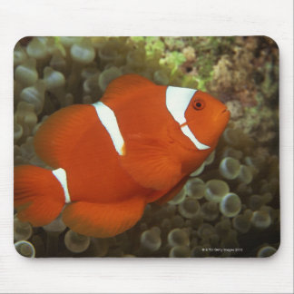 Maroon clownfish with sea anemone mouse mat