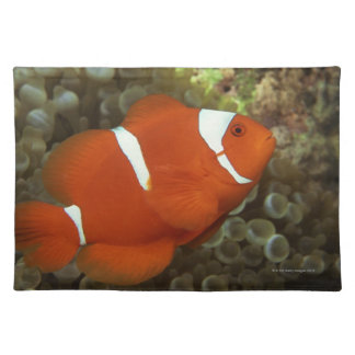 Maroon clownfish with sea anemone placemat
