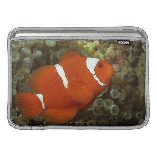 Maroon clownfish with sea anemone sleeve for MacBook air