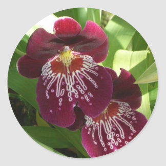 Maroon Orchids II Elegant Floral Classic Round Sticker
