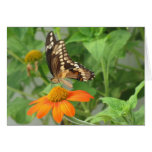 Marriage - As Beautiful as the Butterfly (a) Greeting Card