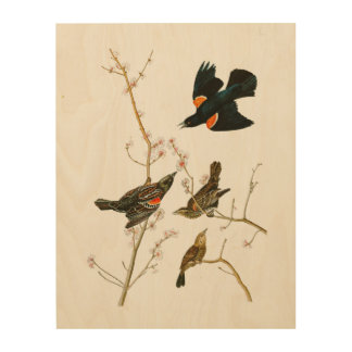 Marsh Blackbird John Audubon Birds of America Wood Wall Decor