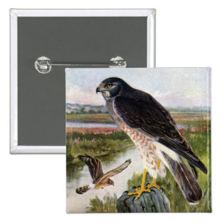 Marsh Hawk 15 Cm Square Badge