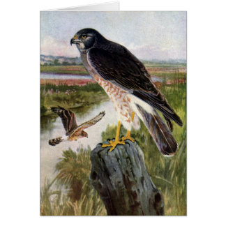 Marsh Hawk Greeting Card