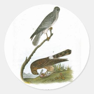 Marsh Hawk Round Sticker