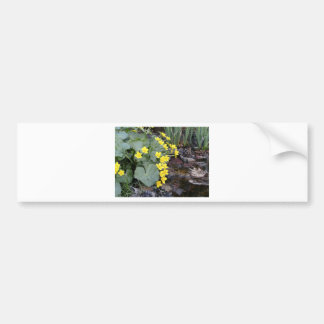 Marsh Marigolds of Bachelder Brook Bumper Sticker