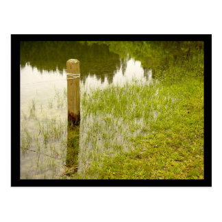 Marsh Postcard