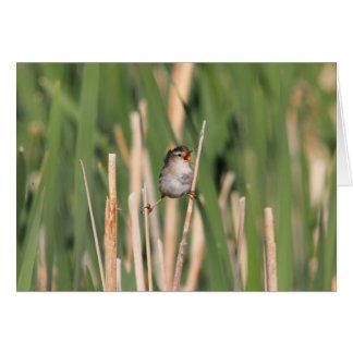 Marsh Wren Card