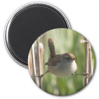 Marsh Wren magnet