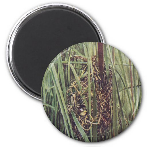 Marsh Wren Nest in Cattails Refrigerator Magnet
