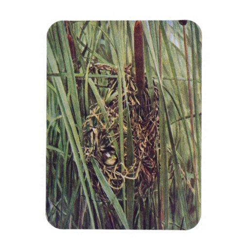 Marsh Wren Nest in Cattails Flexible Magnets