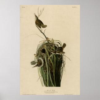 Marsh Wren Print