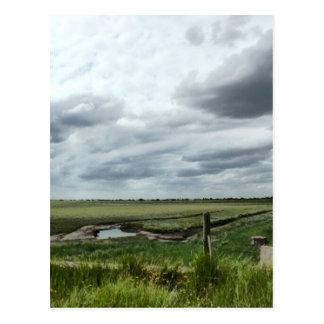 Marshes Postcard