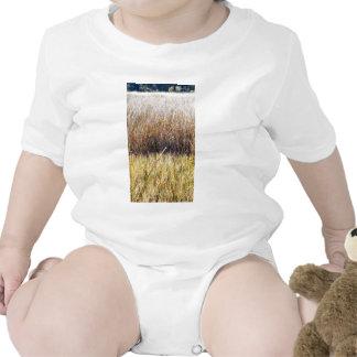 marshgrassescloseup.jpg baby creeper