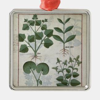 Marshmallow & Hastula Regia Asarabacca & Christmas Ornament