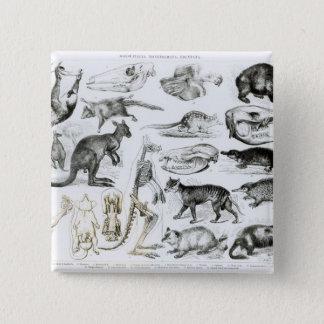 Marsupialia, Monetremata, Edentata 15 Cm Square Badge