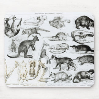 Marsupialia, Monetremata, Edentata Mouse Mat