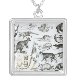 Marsupialia, Monetremata, Edentata Silver Plated Necklace