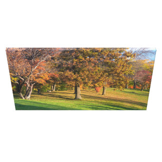 Marthaler Park Autumn Trees on Hilltop Canvas Print
