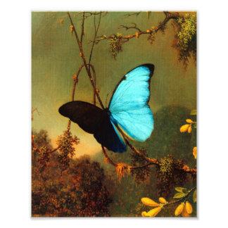 Martin Johnson Heade Blue Morpho Butterfly Photo