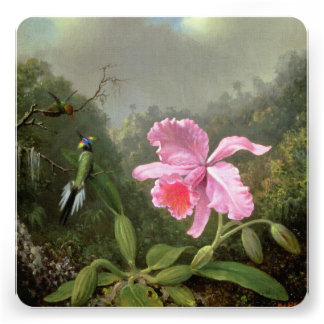 Martin Johnson Heade Orchid And Hummingbirds Personalized Announcements