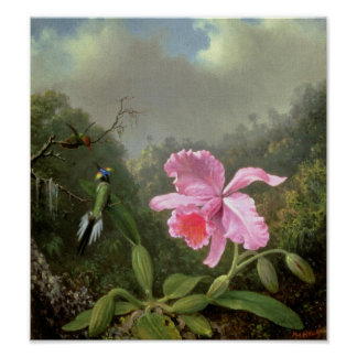 Martin Johnson Heade Orchid And Hummingbirds Posters