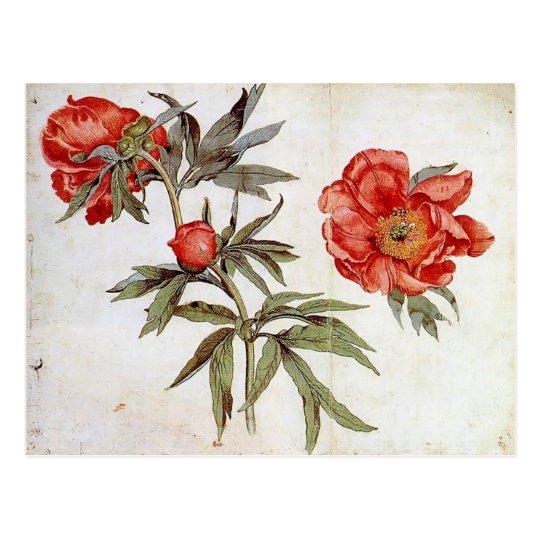 Martin Schongauer: Study of Peonies Postcard