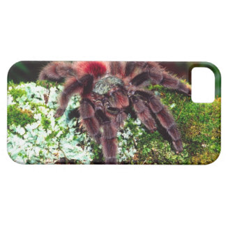 Martinique Tree Spider, Avicularia versicolor, Barely There iPhone 5 Case