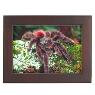 Martinique Tree Spider, Avicularia versicolor, Keepsake Box