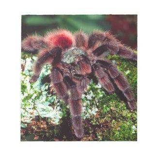 Martinique Tree Spider, Avicularia versicolor, Notepad