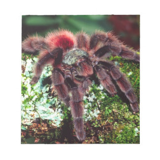Martinique Tree Spider, Avicularia versicolor, Notepads