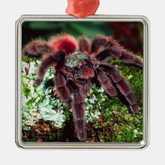 Martinique Tree Spider, Avicularia versicolor, Silver-Colored Square Decoration