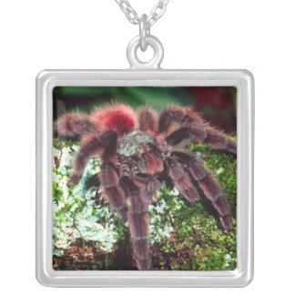 Martinique Tree Spider, Avicularia versicolor, Silver Plated Necklace