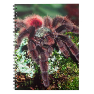 Martinique Tree Spider, Avicularia versicolor, Spiral Notebook