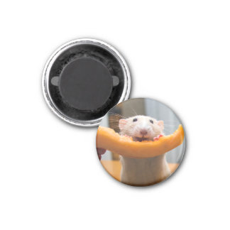 Marty Mouse Canaloop Magnet