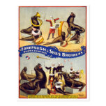 Marvellously Trained Circus Seals, 1899 Postcard