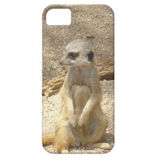 Marvelous Meerkat iPhone 5 Cover