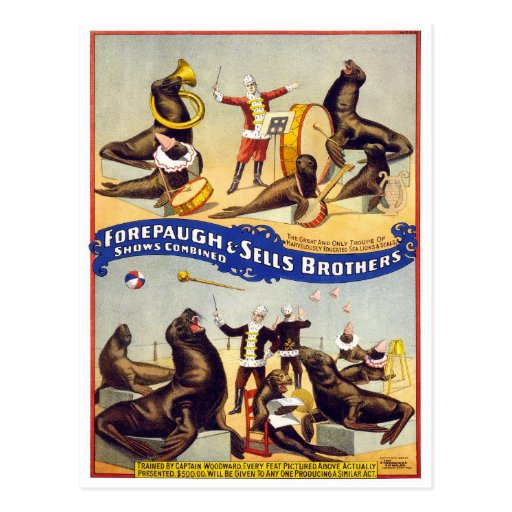 Marvelously Trained Circus Seals, 1899 Postcard