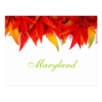Maryland Autumn Leaves Postcard