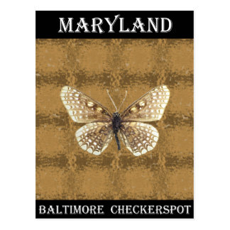 Maryland Baltimore Checker spot Butterfly Postcard