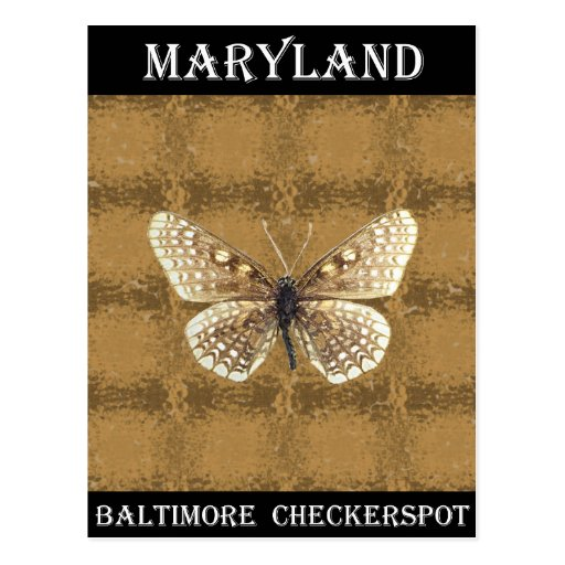 Maryland Baltimore Checker spot Butterfly Post Cards