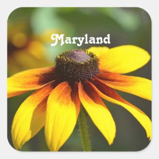 Maryland Black Eyed Susan Square Sticker