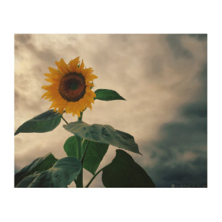 Marymoor Park Sunflower Wood Wall Decor