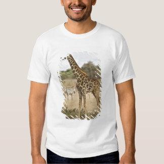 Masai Giraffe and Common Zebra at Amboseli NP, T-shirts