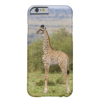 Masai Giraffe (Giraffa camelopardalis 2 Barely There iPhone 6 Case