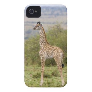 Masai Giraffe (Giraffa camelopardalis 2 iPhone 4 Cover